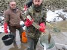 Evakuierungsfischen Mühlgraben_71