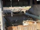 Fischrettung Mühle vorm Damm_55